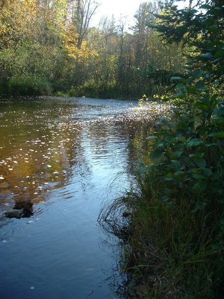 Tyler Forks River, near the proposed Penokee Hills mine - picture by Diane Farsetta